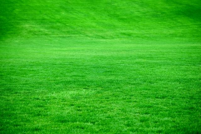Hydro seed lawn installation service in Edmonton