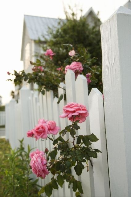 Residential fencing services in Edmonton and surrounding areas. Rail fences, wooden fences, patterned aluminum fencing, customized fencing as per the client's needs, vinyl fencing, chain linkage fencing, farm fencing, facilities for dog kennels, compound fencing, and even handrails.